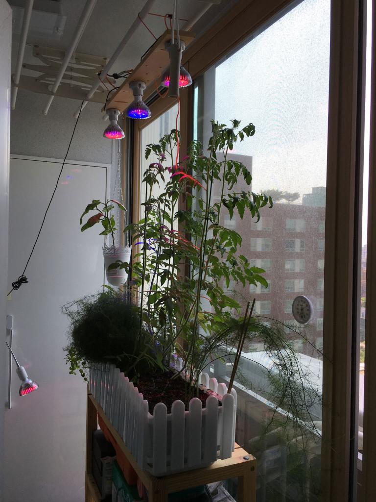 식물 생장용 LED로 만든 사제 스마트 가든